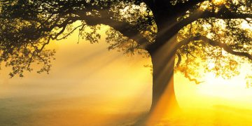 Freedom & Law - The online teachings of Christ - Jesus Christ for Muslims
